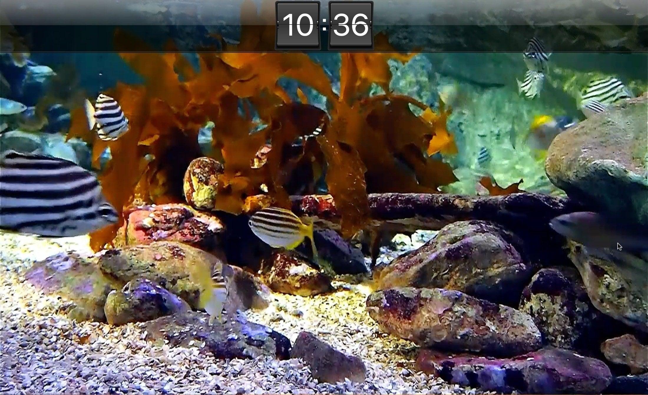 Akvárium Live HD Screensaver Mac
